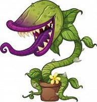 Mérgező növények